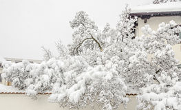 在冬时的用白色雪报道的树,分支和冰 图库摄影