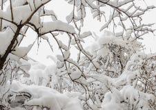 在冬时的用白色雪报道的树,分支和冰 库存图片