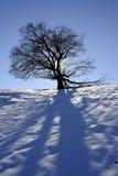 在冬时的结构树 库存照片