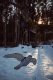 在冬景花园的木鸟 库存照片