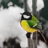 在冬景花园的迷人的小的旗布 库存照片