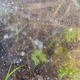 在冰下的生活 在冰的冻草 花雪时间冬天 库存图片