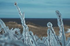在冰下的草-冰冷的雨 免版税图库摄影