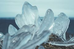 在冰下的草-芬兰海湾 图库摄影