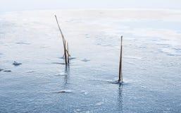 在冰冬天风景结冰的共同的纸莎草 图库摄影