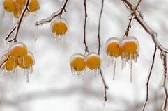 在冰冷的外壳的苹果 库存图片