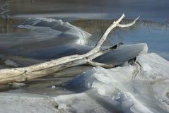 在冰冷的水和雪的漂流木头 库存图片