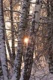 在冰冷的雨以后的冰冷的树在日落 库存照片