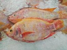 在冰博览会的亦称新红色罗非鱼鱼Pla Tabtim在海鲜市场上 天的抓住的显示 库存图片