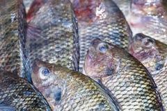 在冰博览会的亦称新罗非鱼鱼Pla Nin在海鲜 免版税库存图片