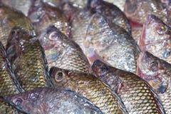 在冰博览会的亦称新罗非鱼鱼Pla Nin在海鲜 免版税库存照片