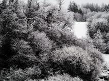 在冰厚实的层数盖的灌木用多雪的分支 阴暗大气和冻雪在环境美化 免版税库存图片