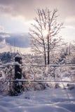 在冰和树结冰的篱芭 免版税库存照片