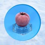 在冰块的冷冻蕃茄 免版税库存图片