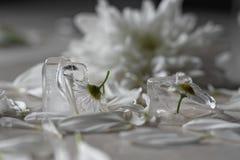 在冰块的花 库存照片