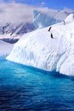 在冰山的企鹅 免版税库存照片