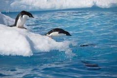 在冰山边缘的Adelie企鹅在南极洲 免版税库存照片