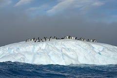 在冰山,威德尔海, Anarctica的Adelie企鹅 库存图片