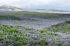 在冰岛平原的看法在夏令时期间 免版税库存图片