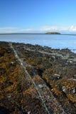 在冰岛海岸的捕鱼网 库存图片