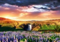在冰岛的南部的伟大的瀑布Skogafoss 库存图片