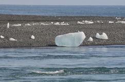 在冰岛的岸的闪耀的冰川 免版税库存图片
