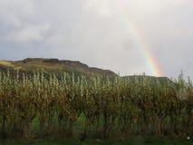 在冰岛的彩虹下 免版税库存照片