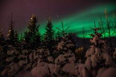 在冰岛积雪的森林上的极光Borealis/北极光 图库摄影