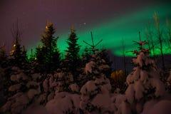 在冰岛积雪的森林上的极光Borealis/北极光 库存图片