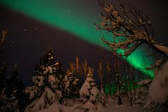 在冰岛积雪的森林上的极光Borealis/北极光 免版税库存图片