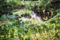 在冰川国家公园的土拨鼠 免版税库存照片