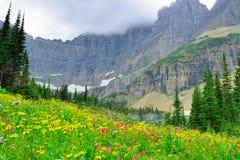 在冰川国家公园风景的狂放的高山花 免版税库存照片