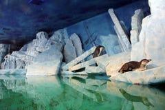 在冰川的两只企鹅 库存照片