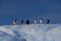 在冰川的企鹅 图库摄影