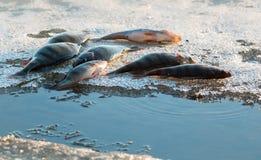 在冰川的大栖息处 免版税库存图片