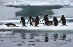 在冰川的Adelie企鹅在南极洲 免版税库存图片