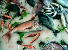 在冰桌上的新鲜的地中海鱼 免版税库存照片