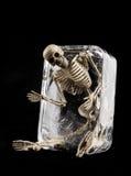 在冰概念,在被隔绝的冰的头骨的死亡 免版税库存图片