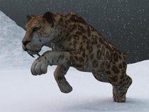 在冰河时期飞雪的齿状军刀的老虎 免版税库存照片