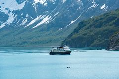 在冰河海湾的全国地理海鸟 免版税库存照片