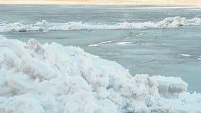 在冰河的鸟海鸥 影视素材