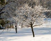 在冰涂上的李子和洋梨树在一个积雪的后院 免版税库存照片