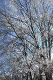 在冰涂上的树枝 库存图片
