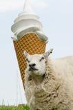 在冰淇凌前面的绵羊 免版税库存照片