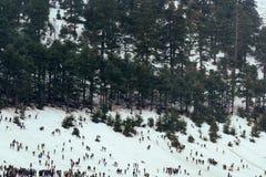 在冰的一冷的美好的多雪的天在冬天 免版税图库摄影