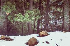 在冰的一冷的美好的多雪的天在冬天 图库摄影