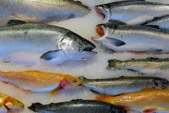 在冰的三文鱼鱼在湿市场上 库存图片