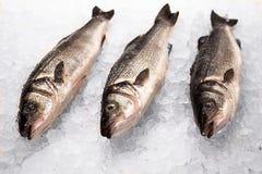 在冰的三条小的鱼 库存照片