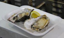 在冰的两只牡蛎服务用柠檬 库存图片