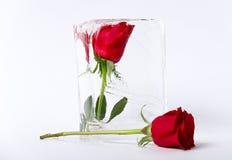 在冰的两朵玫瑰 免版税库存图片